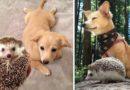 Животные, которые выросли вместе: 34 супер фото