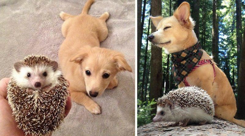 Животные выросли вместе