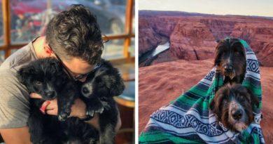 Спасение собак в пустыне