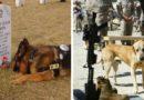Вместе навсегда: самоотверженная любовь собаки и человека