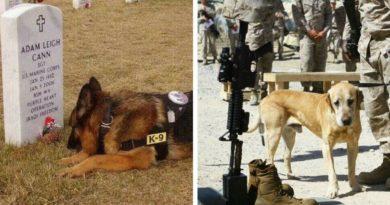Преданность собаки и человека