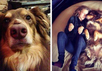 Какой должна быть собака-компаньон