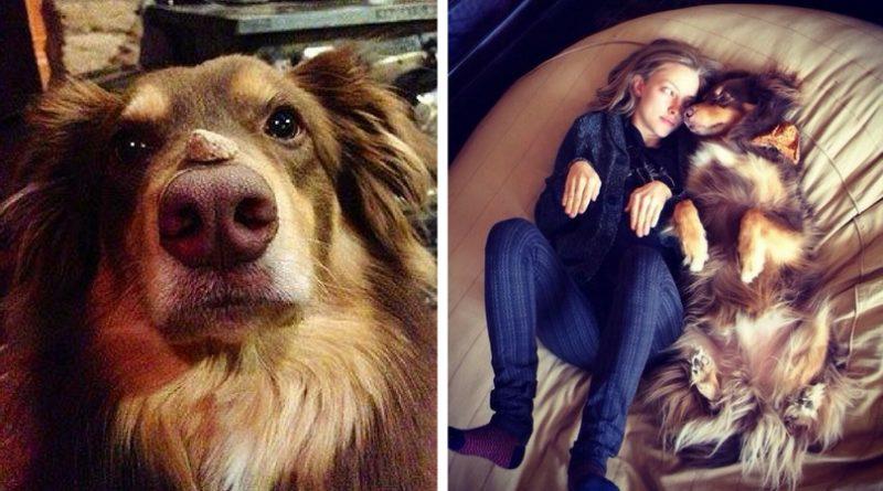 Собаки – компаньоны