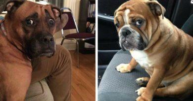 Что раздражает вашу собаку: правда от первого лица