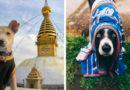 12 собак в Instagram, которые путешествуют больше вас