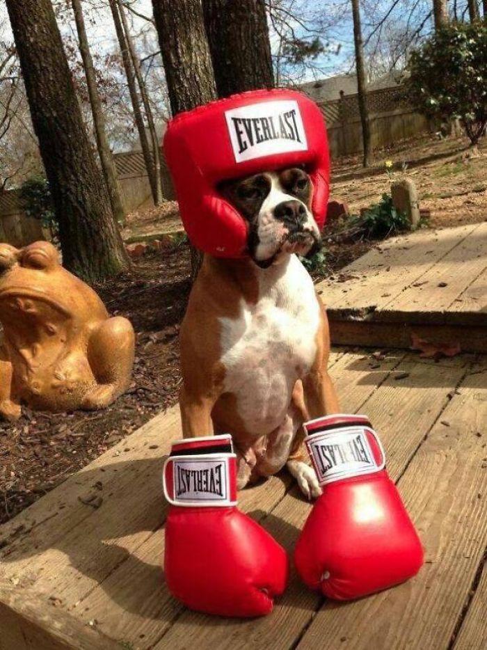 спиной прикольные боксерские картинки какой