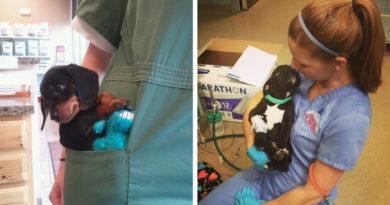 Первый ветеринар вашей собаки: каким он должен быть