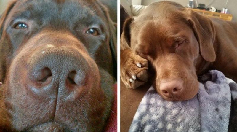 Почему моя собака делает «назло»: правда, как она есть