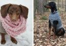 50 идей для осени или как утеплить любимую собаку