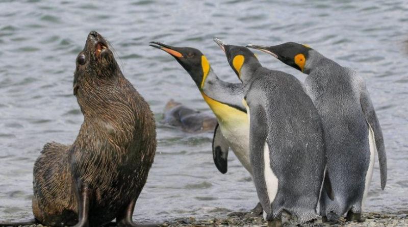 40 смешных фото диких животных, которые сделают ваш день