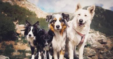Собаки: проникновенные снимки фотографа Кристины Квапиловой