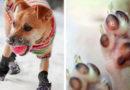 Собака обморозила лапы: как быстро оказать первую помощь