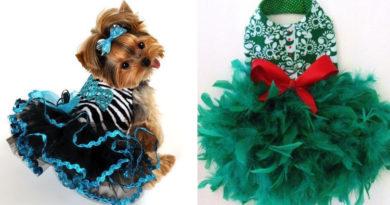 Платья для собак: для праздника и на каждый день