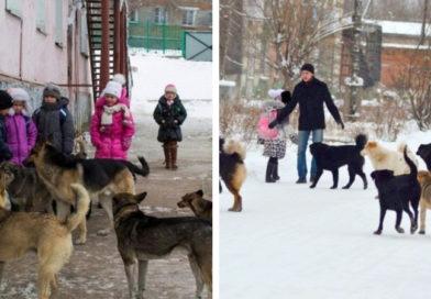 Как отразить атаку и выжить при нападении собак