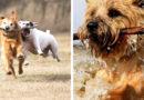 Опасна ли для собаки игра с палкой?
