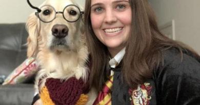 Умный ретривер: первая собака получила диплом о высшем образовании
