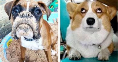 Смешные глаза собак
