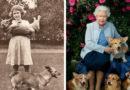 Корги королевы Елизаветы II: любовь длиною в жизнь