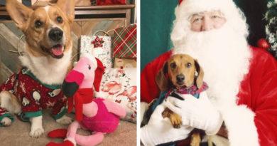 Новый Год для любимой собаки