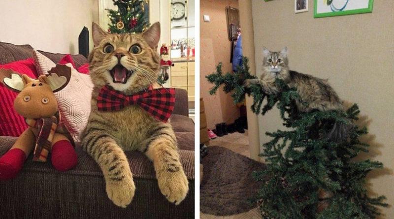 Как котейки Новый Год встречали
