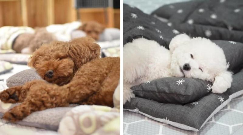 Фотографии из детского сада для собак, перед которыми невозможно устоять
